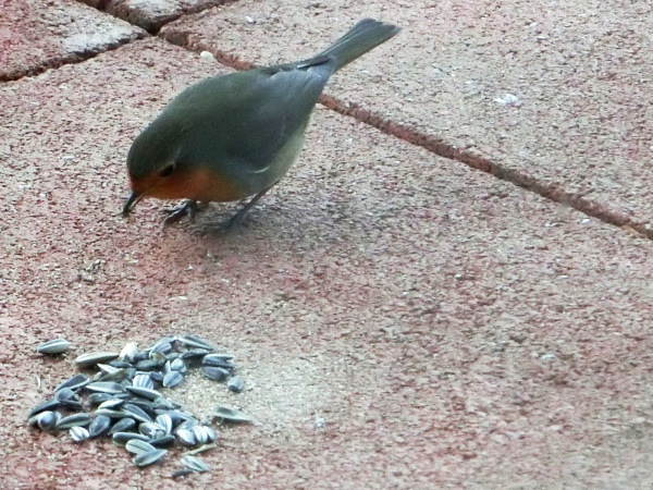 Robin examines the food critically